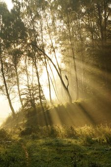 Free Mystic Foggy Landscape In The Morning Stock Photos - 21383383