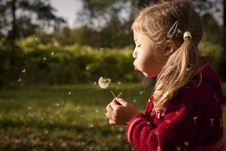 Free Blowing A Dandelion Royalty Free Stock Image - 21383816