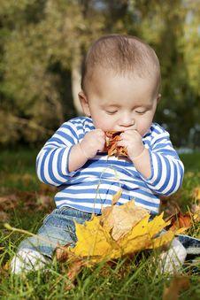 Free A Tasty Autumn Royalty Free Stock Image - 21383916