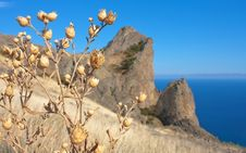 Free Dry Grass On Karadag Mountain. Black Sea, Crimea Royalty Free Stock Photography - 21384197