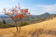 Free Image Of Lone Red Autumn Tree On Karadag Mountain Stock Photos - 21384233