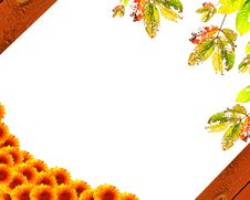 Free Leaves With Background Royalty Free Stock Photography - 21384827