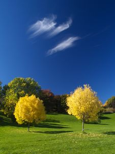 Free Golden Autumn Stock Photography - 21385322