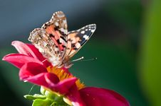 Free Butterfly On  Flower Stock Photo - 21387580