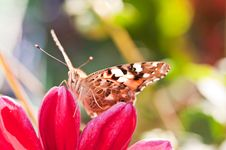 Free Butterfly On Flower Stock Images - 21387614