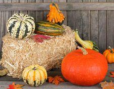 Autumn Gourds Royalty Free Stock Photos