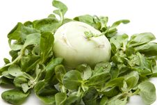 Free Kohlrabi In The Corn Salad Stock Image - 21390051