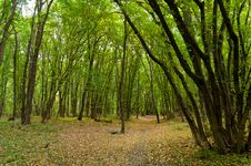 Free Autumn Forest Royalty Free Stock Photography - 21393797