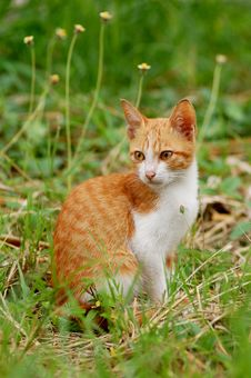 Free Cat In The Meadow Royalty Free Stock Photography - 21393887