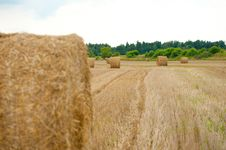 Straw On The Field Stock Images