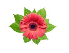 Free Red Flower Stock Image - 21399191