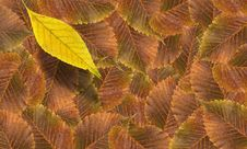 Free Fall Leaves Background Royalty Free Stock Photos - 21399208