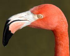 Free Flamingo Face Royalty Free Stock Photography - 2140197