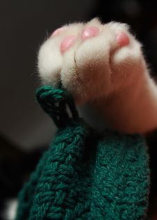 Free Sleepy Cat S Paw Royalty Free Stock Photo - 2140365
