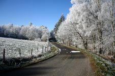 Free White Tree Stock Image - 2144651