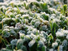 Frosty Morning Stock Photography