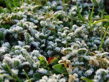 Free Frosty Morning Stock Photo - 2148090