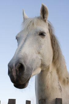 Free Horse Stock Photos - 2148263
