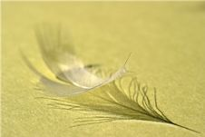 Free Down Feather Royalty Free Stock Photo - 2149465