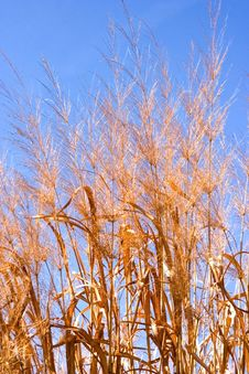 Free Prairie Grass Stock Image - 2149601