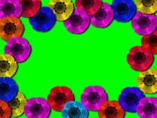 Free Multi-coloured Flowe Stock Images - 2149694