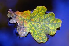 Free Blue Water Leaf Royalty Free Stock Image - 21405846