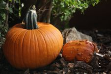 Free Pumpkins From The Side Royalty Free Stock Photos - 21406208