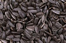 Free Seeds Stock Photo - 21407650