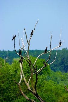 Free Birds On The Branches Royalty Free Stock Photography - 21408787