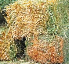 Free Bales Of Hay Stock Images - 21409754