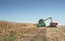 Corn Harvest Stock Photography