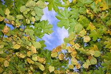 Free Autumn Leaves Floating In The Sky Stock Photography - 21414992