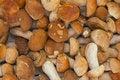 Free Mushrooms At A Market Stock Image - 21422221