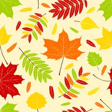 Free Autumn Leaves. Royalty Free Stock Photography - 21422867