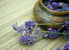 Free Lavender Stock Photography - 21431312
