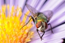 Fly Royalty Free Stock Photography