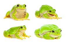 Free Tree Frog Collection Royalty Free Stock Image - 21437926