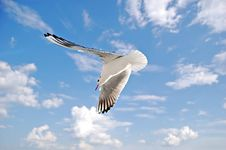 Free Seagull In The Sky Stock Photos - 21440173