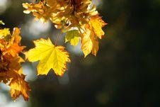 Free Autumn Leaves Royalty Free Stock Photos - 21441388