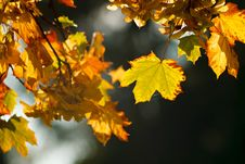 Free Autumn Leaves Stock Photography - 21441432