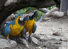 Free The Multi Colored Parrot Royalty Free Stock Images - 21442839