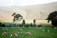 Free Rural Landscape With Grazing Sheep Stock Photos - 21446693