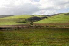 Free Green Landscape With Vineyard And Crop Fields Stock Photography - 21446792