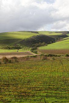 Free Green Valley With Vineyard And Crop Fields Royalty Free Stock Photos - 21446838