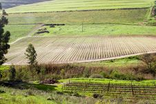 Free Fertile Valley With Vineyard And Crop Fields Royalty Free Stock Photography - 21446917