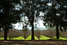 Free Landscape With Trees In An Orchard Stock Photos - 21447573