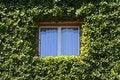 Free Small Window Stock Photography - 21459822