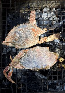 Free Grilled Crab Stock Photo - 21455980