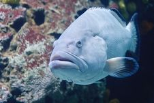 Free Blue Fish, Rotterdam Zoo Stock Photography - 21460202