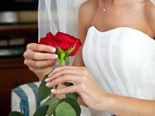 Free Bride With Red Rose Stock Images - 21463454
